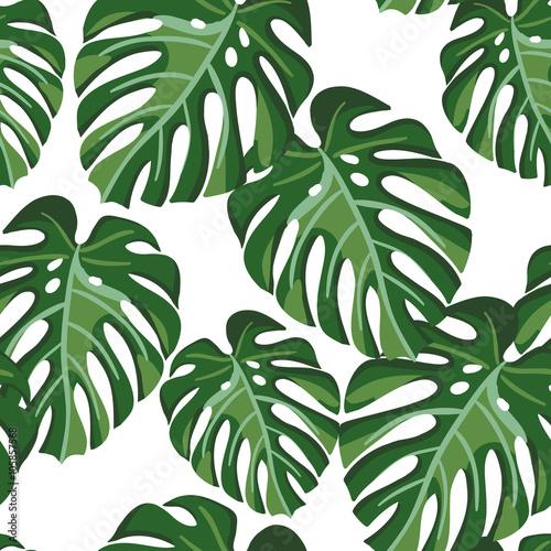 Materiał do szycia Monstera palm liść na białym tle. Wektor wzór z tropikalnych roślin. Liści tropikalnej dżungli.
