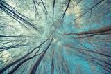 Fototapeta Las - Trees Web Background