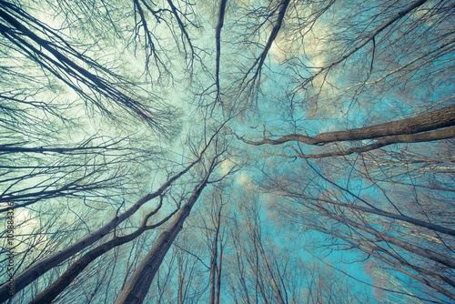 Tło sieci drzew
