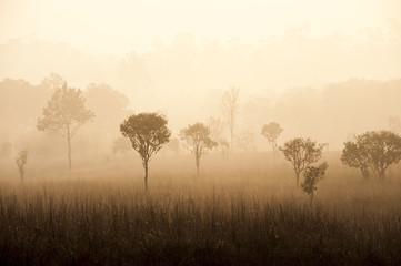 Fototapeta na wymiar sunrise in savanah meadow