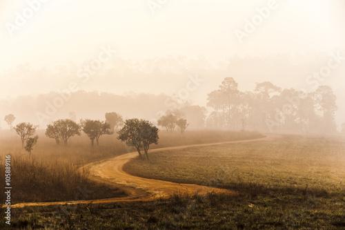 Obrazy na płótnie Canvas Road of savanna Field in summer season.