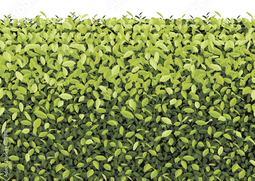 Fotomural Green Tree Wall on isolated Vector