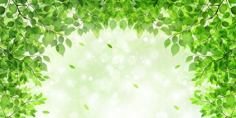 Fototapeta葉 新緑 木 背景
