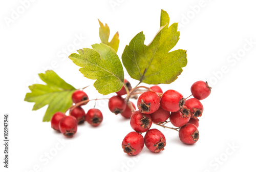 Photo hawthorn berries isolated