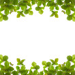 Fresh Green leaf isolated background.