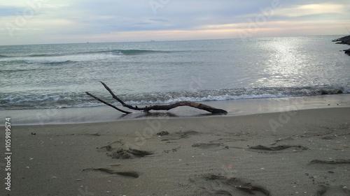 Fotografia  ramo sulla riva del mare