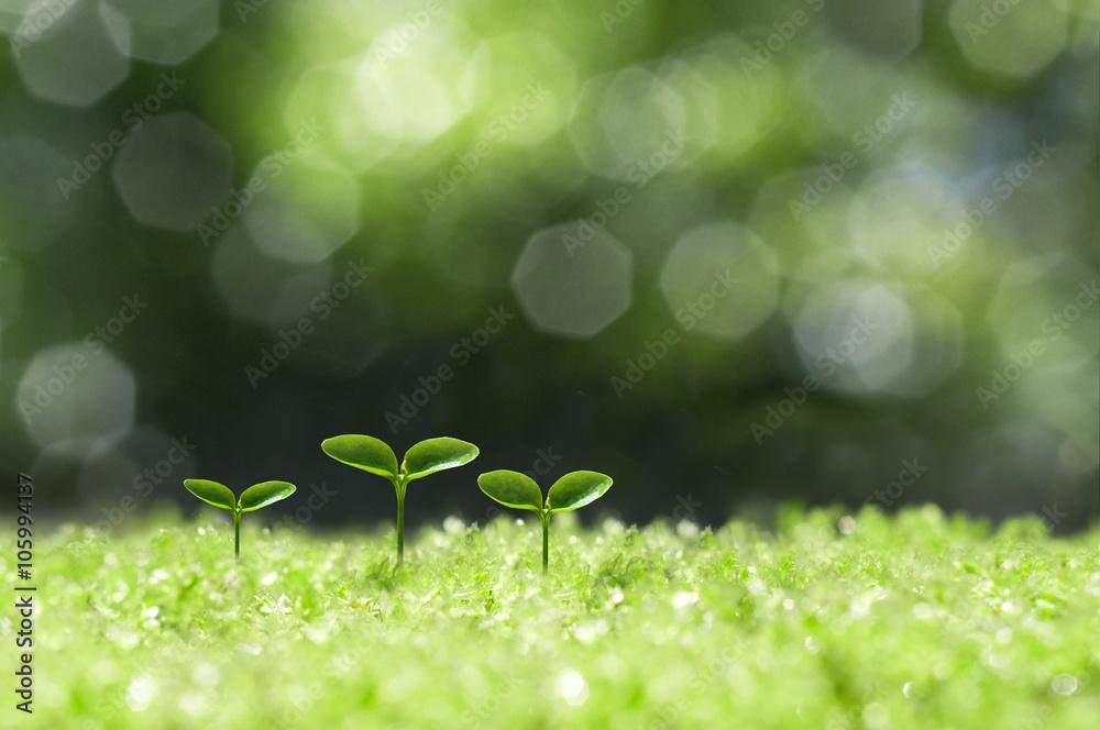 Fototapeta 森の中の芽生え