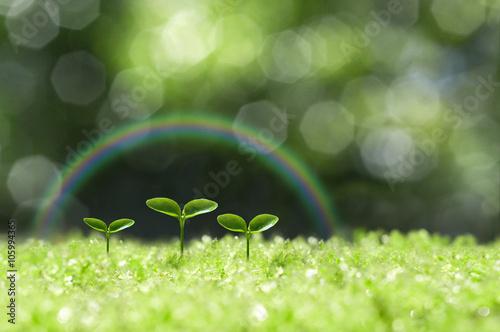Fotografía  森の中の芽生え