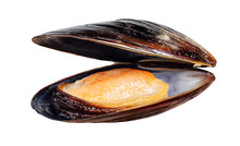 Mussel Isolated On White