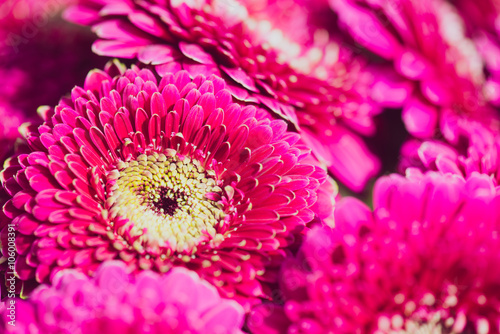 Ingelijste posters Gerbera Mixed type of flowers, Wedding bouquet of flowers, close up floral background