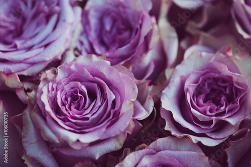 purple rose flower bouquet vintage background close up of wedding bouquet buy this stock photo and explore similar images at adobe stock adobe stock adobe stock
