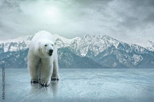 White polar bear on the ice Wallpaper Mural