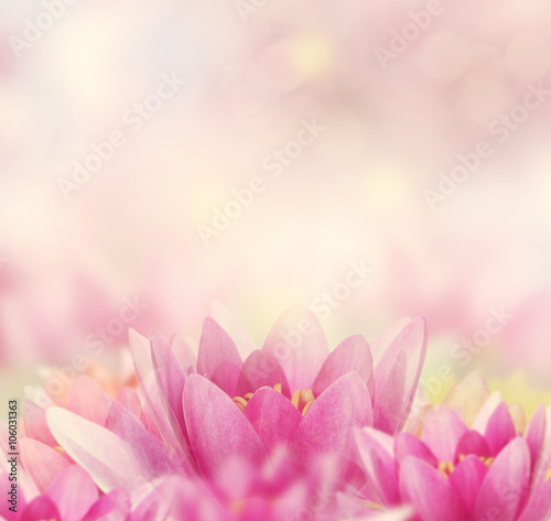 Foto op Aluminium Lotusbloem Water Lily Background