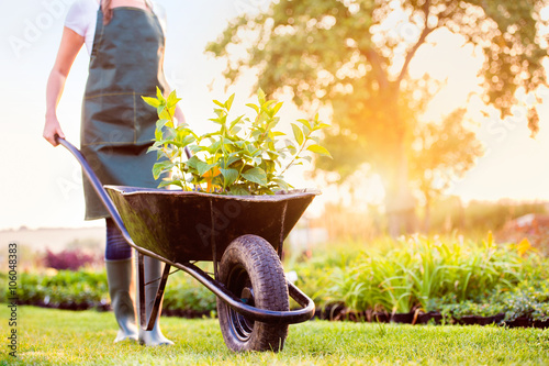 Fotografía  Unrecognizable gardener carrying seedlings in wheelbarrow, sunny