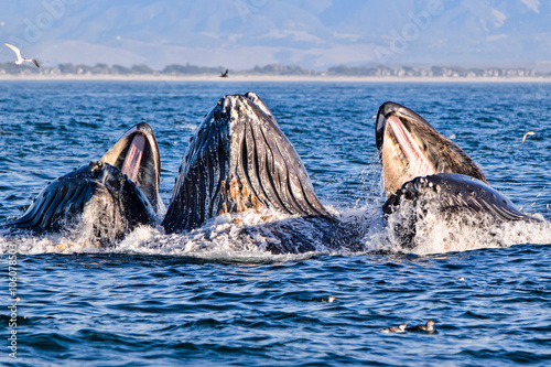 Fotografie, Obraz  Humpback Whale