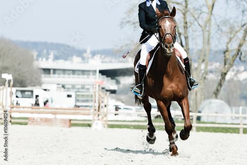 Spoed Foto op Canvas Paardrijden équitation cheval cavalier concours saut obstacle hippique