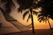 silhouette photography of beach cradle on coconut tree against b
