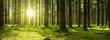 Leinwandbild Motiv Sunlight in the green forest.