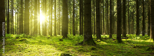 Poster Bossen Sunlight in the green forest.