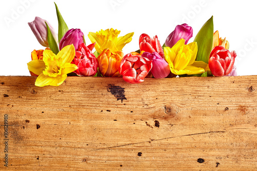 Fotografie, Obraz Border of vivid brightly colored spring flowers