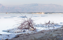 Dead Sea Beach Salt Lump.