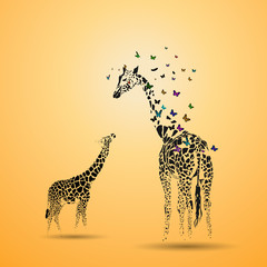 Fototapeta Żyrafa Giraffe with her baby