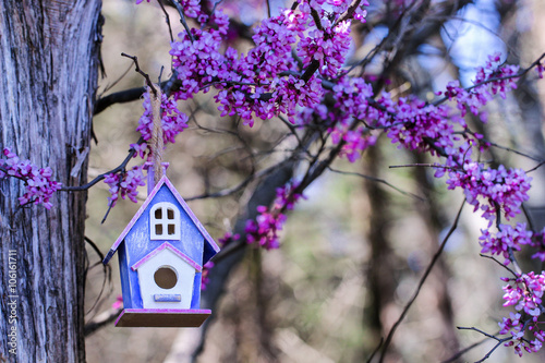 Close up of birdhouse hanging by purple spring tree blossoms Wallpaper Mural
