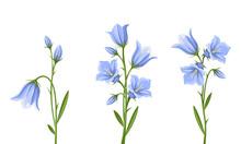 Vector Set Of Blue Bluebell Fl...