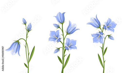 Vector set of blue bluebell flowers isolated on a white background vector set of blue bluebell flowers isolated on a white background mightylinksfo