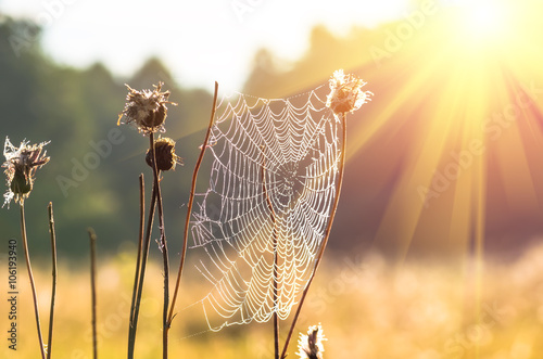 Plakat Pajęczyna na suchej trawie