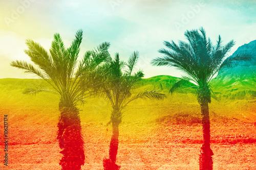 Fototapeta Beautiful background with palms
