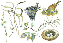 Bird, Egg, Nest, Branches And Leaves, Watercolor. For Background, Textiles.