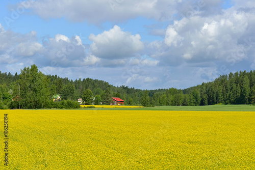 Cadres-photo bureau Jaune Finnish countryside landscape with yellow field of rapeseed and field of wheat