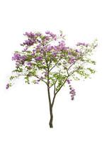 Tree Image, Tree Object, Tree ...