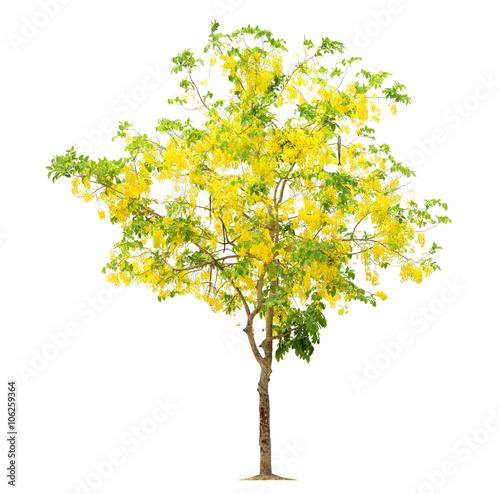 Fotografia, Obraz  Tree flower yellow, Tree image, Tree object, Tree JPG isolated o