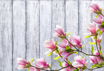 FototapetaMagnolia flowers on background of shabby wooden planks