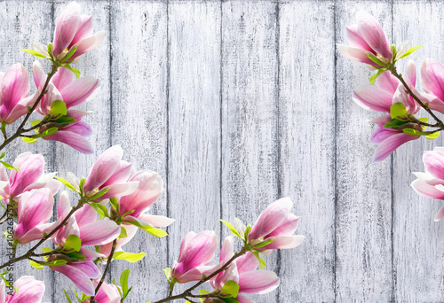 magnolia-kwitnie-na-tle-podlawe-drewniane-deski