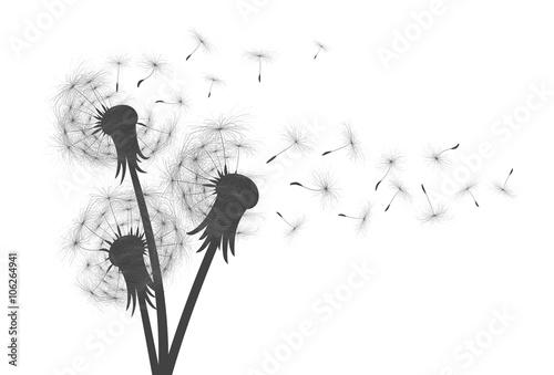 Obraz w ramie Flower of field dandelion.
