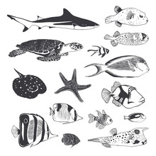 Collection Of Sea And Ocean Inhabitants. Fish, Turtle, Shark. Bl