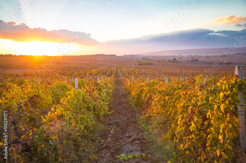Deurstickers Oranje eclat Gorgeous sunset over beautiful green vines