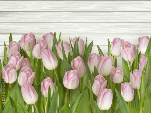 Foto-Plissee - Beautiful pink and white tulips. EPS 10 (von beholdereye)