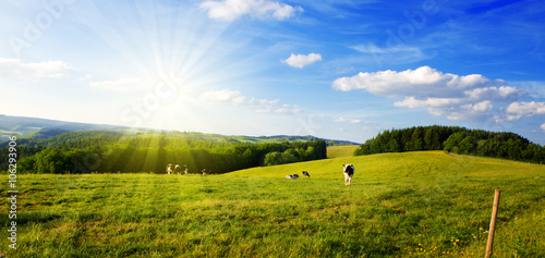 Foto op Plexiglas Weide, Moeras Summer landscape with green grass and cow.