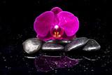 Fototapeta Kamienie - Storczyk i kamienie zen