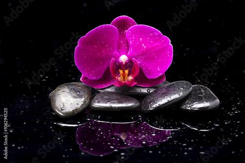 Naklejka premium Storczyk i kamienie zen