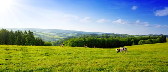 Krajobraz lato z zieloną trawą i krową.