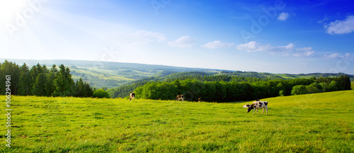 Tuinposter Blauwe hemel Summer landscape with green grass and cow.