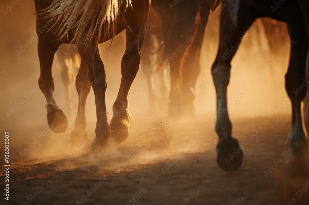 Fototapety, obrazy: Końskie nogi
