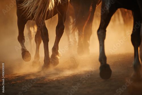 Foto op Canvas Paarden Horse's legs