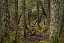 Path In The Alaskan Rainforest