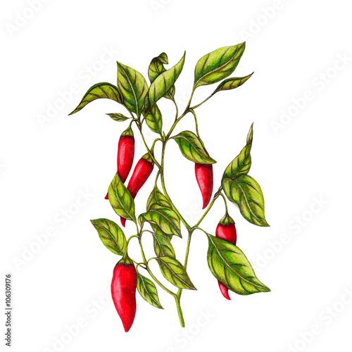 Photo  Chili pepper